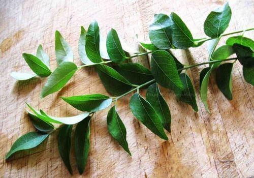 листья карри в терапии и кулинарии