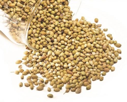 кориандр растение семена
