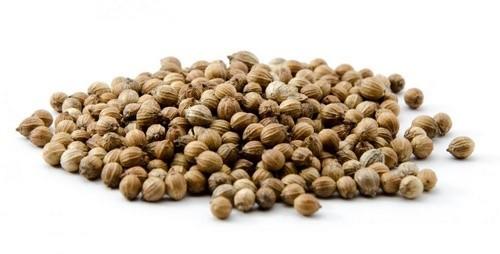 семена кориандра польза вред
