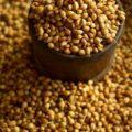 чем полезны семена кориандра