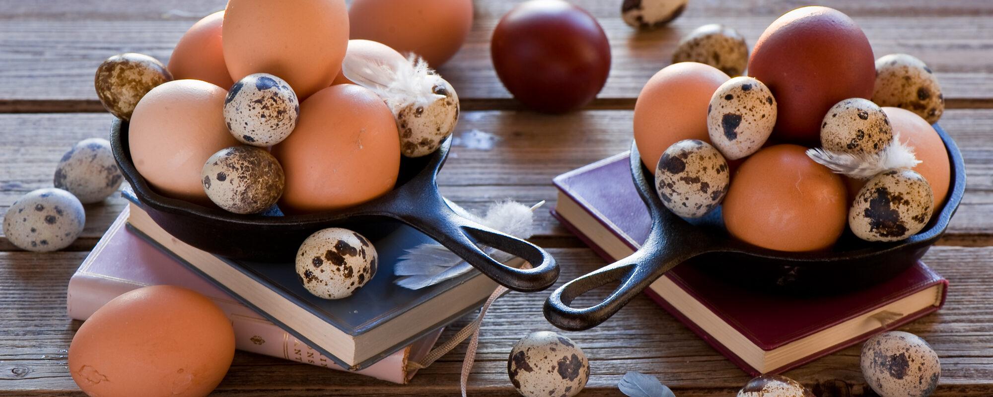 Едят ли веганы яйца? Существует ли альтернатива обычным яйцам?