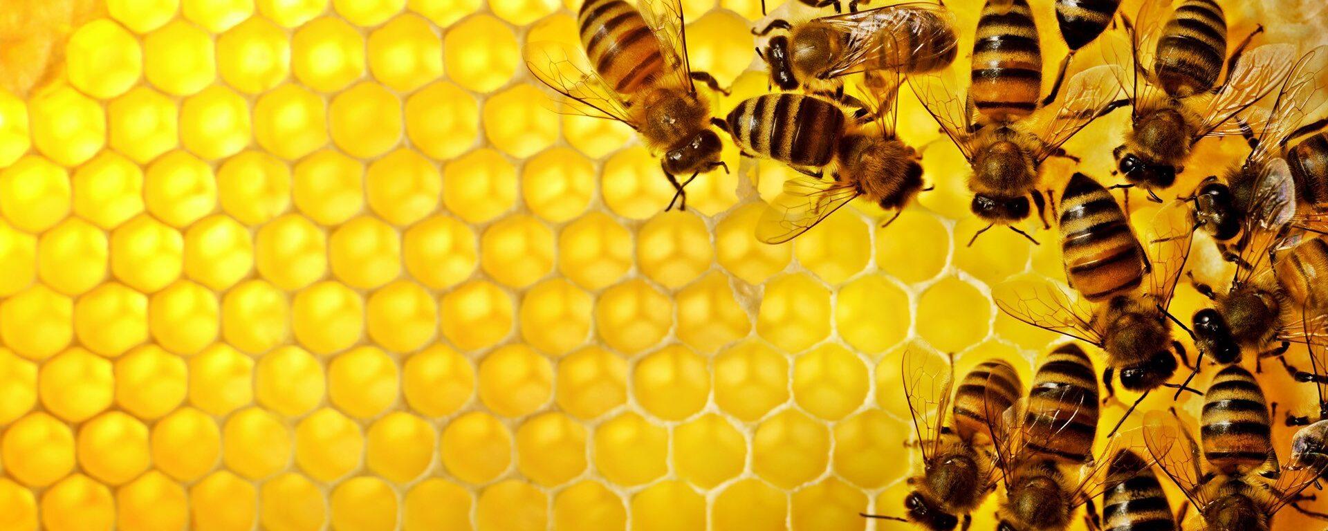 Едят ли веганы мед?